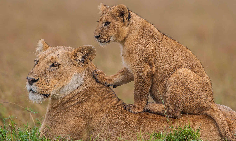 Life Nature Safaris Kenya Safaris