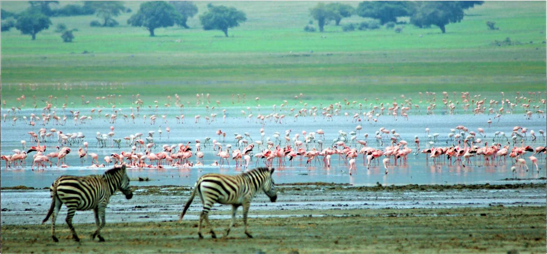Life Nature Safaris Kenya